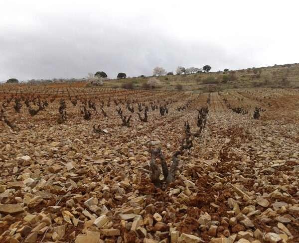 DOP Calatayud, apuesta por el vino ecológico