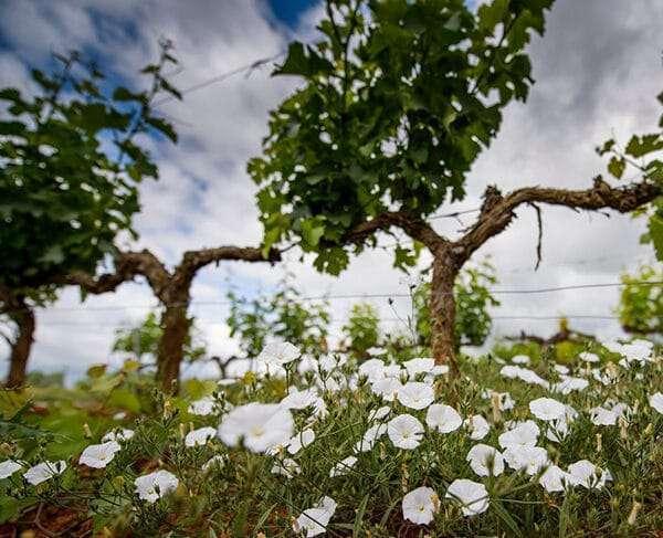 Invitación al primer simposio de viticultura regenerativa