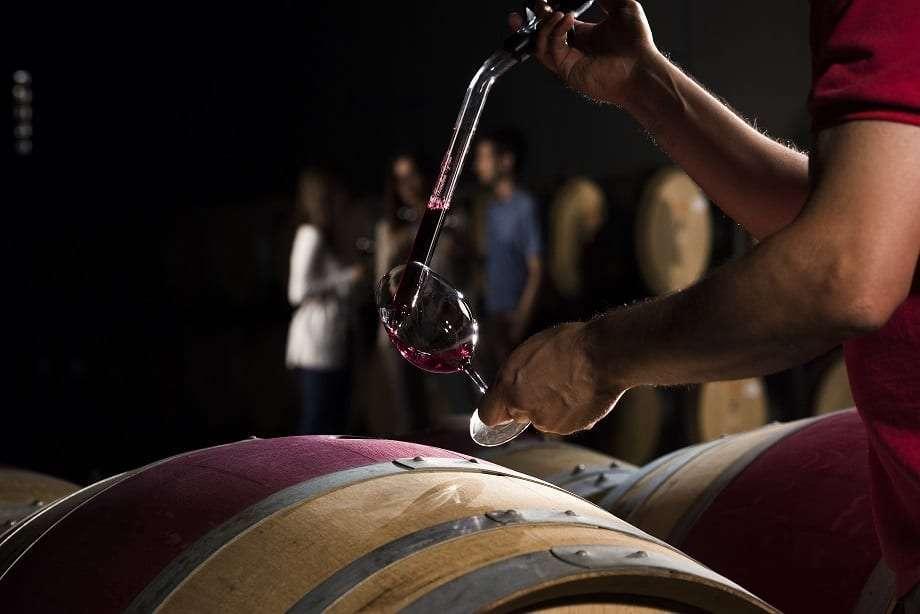 Experiencia de vinos en Bodegas Torres