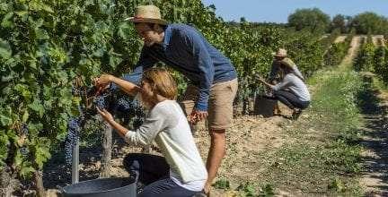 Familia Torres propone dos experiencias singulares para vivir la vendimia en el Penedès