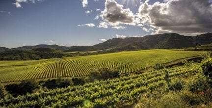 La variedad ancestral pirene cultivada por Familia Torres, entre los vinos favoritos del crítico del New York Times