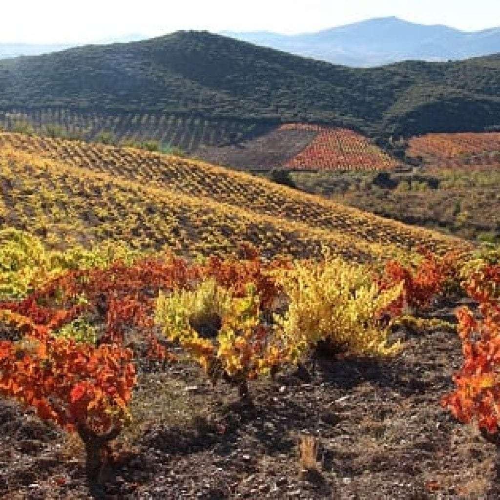 Los vinos de D.O. Calatayud, 18 medallas en el Concurso de las Garnachas del Mundo